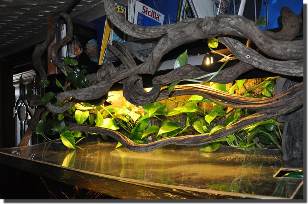 Aldil del vetro un acquario che va oltre le lastre 2 0 - Acquario per casa ...