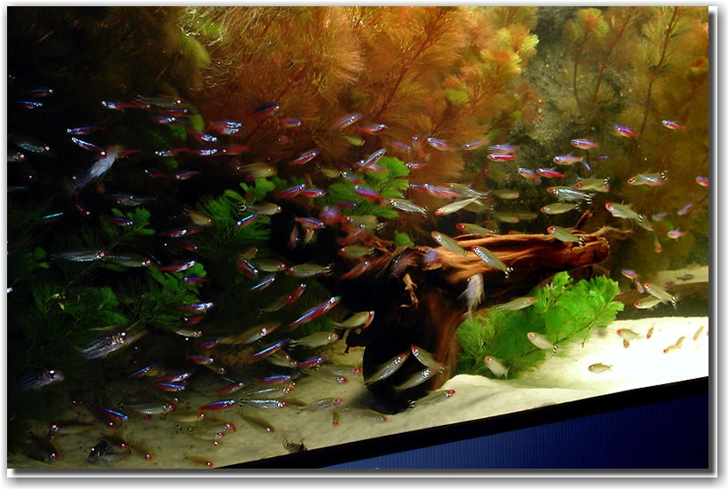 Biotope-Aquarium-of-H2