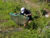 10-heiko-collecting-c-bleheri-again-in-2009-in-its-typical-habitat-while-drying-up