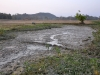 12-the-habitats-can-dry-up-almost-completely-only-mud-remains