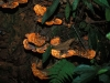 In this protected (at least that is what is written) mountain area are still beatiful tropical mushrooms (51), all kind of exotic flowers (52&53), even fantastic Heliconias (54) and seeds everywhere (55).