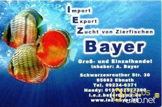IEZ-Bayer