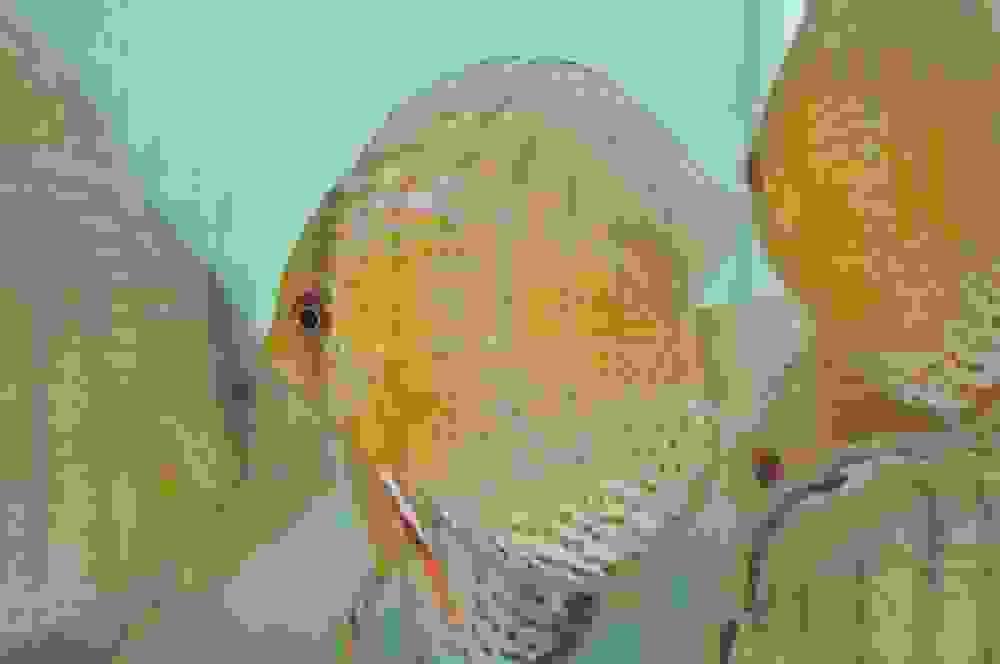 DSC_0219